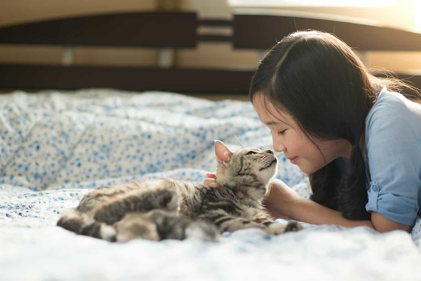 cat insurance surrey